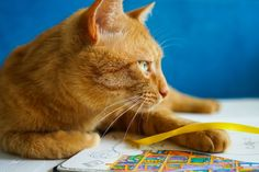 Orange Cat - Adult coloring pages by ColoringNotebook. Paper journal with coloring pages for adults. Tags: #orange #tabby #cat, #books, #adult #coloring #pages.