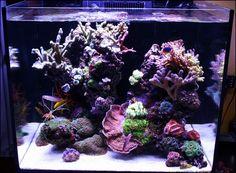 De Red Sea Reefer 170 in januari 2017. - Aquarium idee