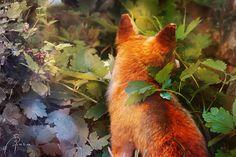 Fox art:*