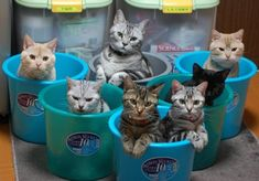 猫マンションまとめ | A!@attrip
