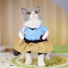Cheap cat costume, Buy Quality funny cat costumes directly from China funny cat clothes Suppliers: Funny Dog Cat Costumes Urashima Taro Cosplay Suit Pet Apparel Halloween Christmas Clothes For Puppy Dogs Costume for a cat Cat Dog Costume, Pet Halloween Costumes, Pet Costumes, Funny Costumes, Dog Halloween, Halloween Christmas, Christmas Clothes, Animal Costumes, Halloween Cosplay