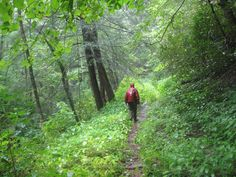 The Appalachian Trail, as originally conceived, is not merely a footpath through the wilderness, but a footpath of the wilderness