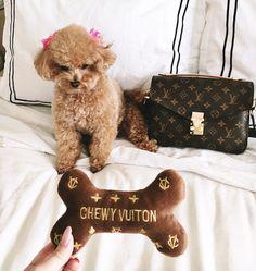 Blondie in the City   Instagram @HayleyLarue   Louis Vuitton Pochette Metis   Chewy Vuitton Dog Toy