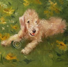 Fine Art Print (MB135) - Bedlington Terrier