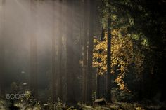 The Last Rays by Gerald Huter - Photo 126233587 - 500px
