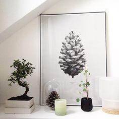 Repost from @heimatbaum (Instagram). 1:1 Pine Cone (grey) by Form Us with Love. Buy print at https://paper-collective.com/product/nature-11-pine-cone-grey/ #goodmorning #mynightstand #interiorstyling #meinikea #fürproduktinfobildanklicken #bonsailove #urbanjunglebloggers