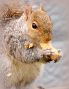 Scary Squirrel 2