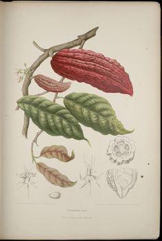 Fleurs, fruits et feuillages choisis de l'ille de Java - Biodiversity Heritage Library