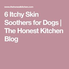 6 Itchy Skin Soothers for Dogs   The Honest Kitchen Blog