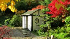 The firework display of autumn colour in the Japanese Tea Garden at Kingston Lacy © Teresa Evans Kingston Lacy, Formal Gardens, Fireworks, Evans, Gazebo, Outdoor Structures, Japanese, Display, Autumn