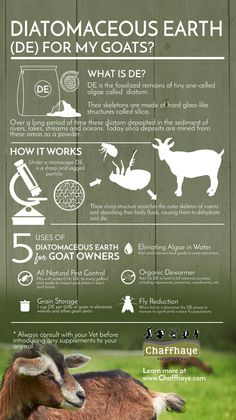 One of the most popular and effective methods for naturally deworming goats is Diatomaceous Earth (DE)