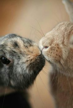 sweeeet....love the coloring on both of these bunnies