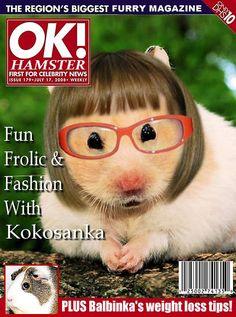 OK Hamster...