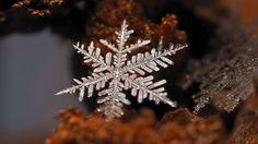 Macro image of a snowflake. #deepcor #snowflake #photography #science #winter #nature