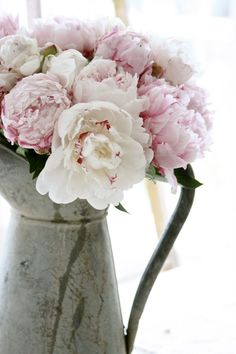 Peony (for floral piece)