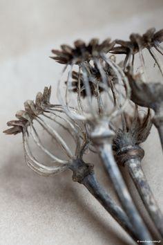 Squelette de pavot. #1                                                                                                                                                                                 Plus