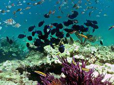Florida Keys Coral Reef | Looe Key Coral Reef National Marine Sanctuary | Flickr - Photo Sharing ...