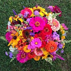 zinnia bouquet - Google Search