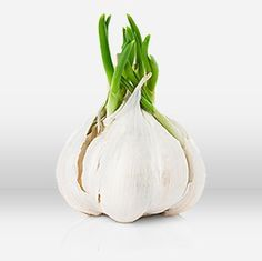 The garlic loving community really is its own culture. We at Garlic Shaker are happy to be a part of it in our own small way and hope you will jump right in and join the rest of the garlic fun too! Health And Wellness, Garlic, Plants, Fun, Health Fitness, Plant, Planting, Lol, Planets