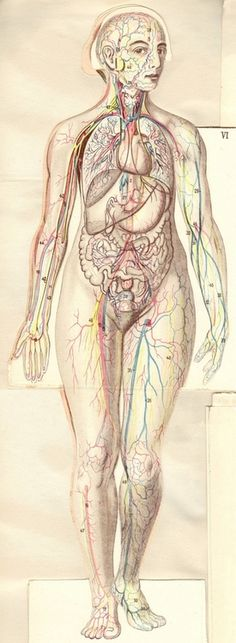 circulation Anatomy Art, Human Anatomy, Human Body Facts, Heart Artwork, Collage Drawing, Medical Anatomy, Under My Skin, Vintage Medical, Medical Art