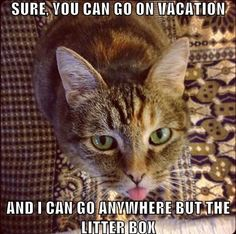 We have the solution - luxury cat boarding at The Cat Doctor. www.thecatdoctoronline.com