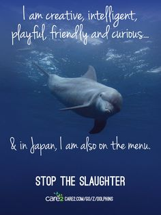 The Cove: Help Save Japan's Dolphins - Please sign the petition to stop this year's dolphin slaughter!