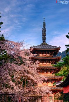 Daigoji Pagoda and Cherry Blossom.    Daigoji is a large temple complex in Kyoto, Japan. It contains 18 designated national treasures.    This pagoda was built in 951 and is the oldest surviving building in Kyoto having survived the Onin War in the 1400s.