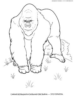 Gorilla Coloring Page COLORING PAGES FOR FREE