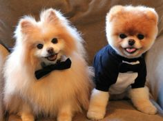 Buddy & Boo ... all dressed up with somewhere to go!
