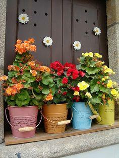 Plantas en las ventanas