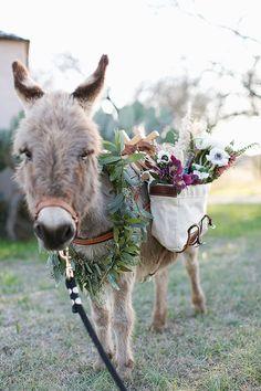 Cute burro.  The Jewel of Texas