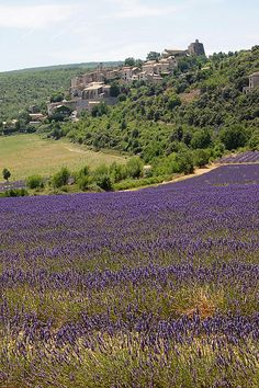 Provence, France... I can smell you now! Mmmmmm!