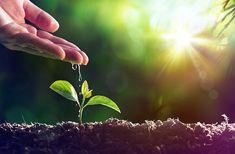 Pour réussir ses semis rien de tel que les trucs et astuces de nos anciens. D'abord pour mieux conserver les graines mettez-les dans une enveloppe...