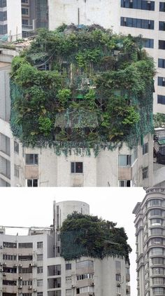 A Chinese businessman hid two illegally built extra storeys on his penthouse suite with trees and plants. A Chinese businessman hid two illegally built extra storeys on his penthouse suite with trees and plants. Rooftop Garden, Balcony Garden, Photographie Portrait Inspiration, Green Architecture, Welcome To The Jungle, Concrete Jungle, Interior And Exterior, Beautiful Places, Scenery
