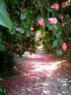 Take a virtual tour of Charleston's Middleton Place, America's oldest landscaped garden and get inspiration for starting a Southern garden. Garden Club, Lawn And Garden, Garden Paths, Middleton Place, Ranunculus Flowers, Pink Garden, Garden Pictures, Southern Charm, Southern Living