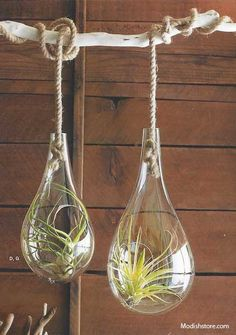 Roost Recycled Glass Bubble Hanging Terrariums *Next Day Shipping* – Modish Store
