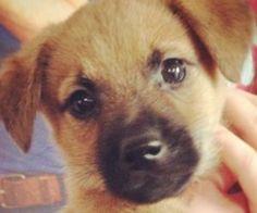 Wir haben ein neues Baby! MEET #TEDDY!