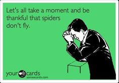 "This is what they should say over announcements in the morning. ""First, a moment of silence to be thankful that spiders can't fly, and then the pledge!"""