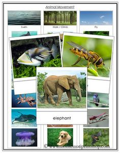 Animal Movement - Swim, Walk, Fly  This printable pdf file will assist children with the understanding and classification of animal movement.  - Instructions - 3 Category Cards - 18 photographic Sorting Cards with labels (6 swim, 6 walk, 6 fly) - 1 Control Chart showing the correct classification of the cards  Created and designed by Montessori Print Shop