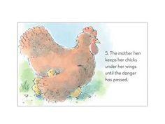 Chicks and Hens https://www.youtube.com/channel/UC54yXWAB56qaqVH-3t2mehQ?disable_polymer=true