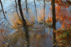 cerchi nell'acqua   da lil.ly