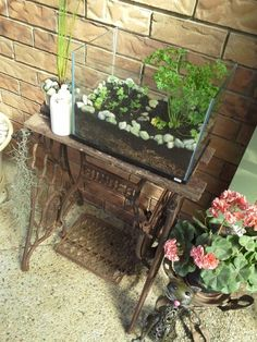 (Fish tank herb garden)(Recycled sewing wheel table)