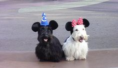 Minnie & Minnie ~ Pretty cute although generally I feel Scotties are MUCH too dignified to be dressed in anything.  Tartan maybe the exception.  th