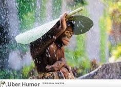 Cute rainy day quotes let the rain kiss you. Let the rainfall beat upon your head with silver water drops. Let the rain sing you a lullaby. Tears of joy are like the summer rain dropping pierced by sunbeams. For more such cute rainy day quotes, visit at http://quoteshunter.com/rainy-day-quotes/