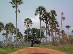 Sine Saloum-delta (Senegal)