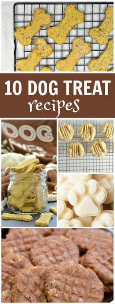 10 Dog Treat Recipes to Make at Home for Your Dogs! You'll find easy dog treat recipes in this collection such as Cheddar- Bacon Dog Treats, Yogurt- Peanut Butter Banana Dog Treats, Peanut Butter Dog Treats, Pumpkin Dog Treats and More!
