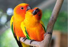 Parrot Food, Bird Toys and Supplies - All Parrot Products