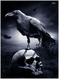 The raven represents death and ill fate and the fact that it is at the castle just before Duncan is murdered is Shakespeare's way of saying there are supernatural forces playing roles in our lives. Description from pinterest.com. I searched for this on bing.com/images