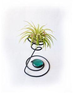 Plantarium - экзотика у нас дома.