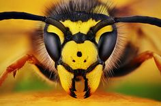 Most Amazing and Rarely Seen Macro Photos of Insects and Bugs in Beautiful Settings Symmetry Photography, Insect Photography, Animal Photography, Photography Studios, Photography Marketing, Photography Backdrops, Life Photography, Children Photography, Foto Macro